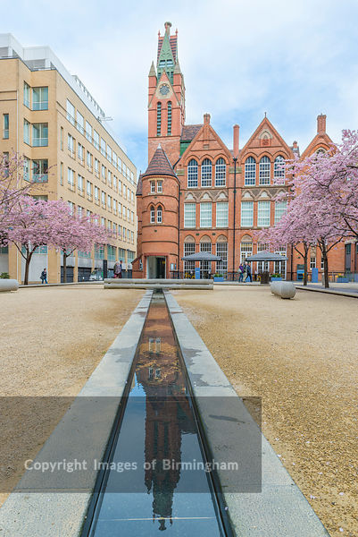 Cherry Blossom on the trees in Oozells Square, Brindleyplace, Birmingham.
