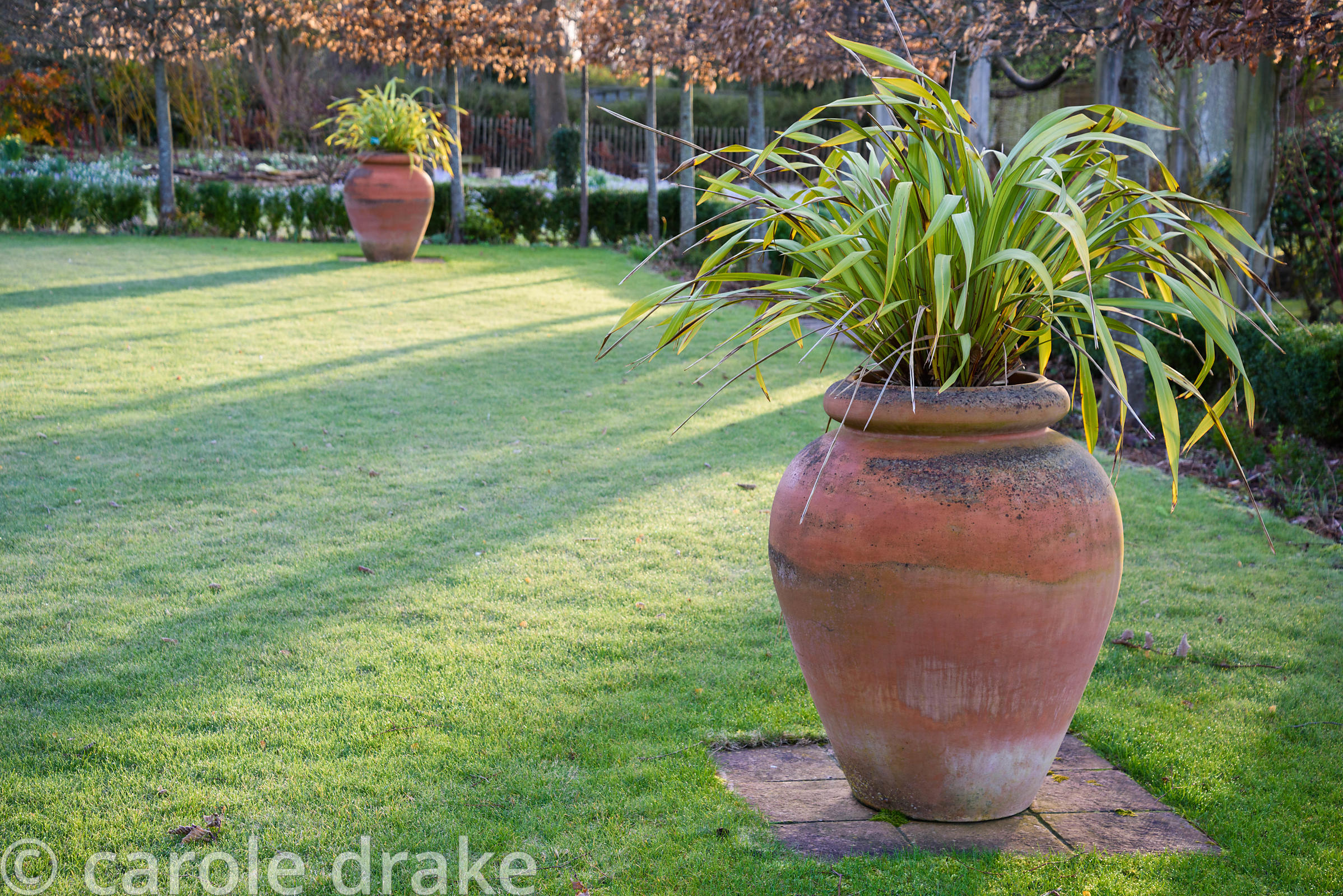 Urns containing Phormium tenax 'Yellow Wave' on a winter's morning at The Down House, Hampshire