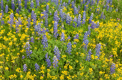Wildflower Mixture