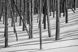 Black_White_Forest_FinWH