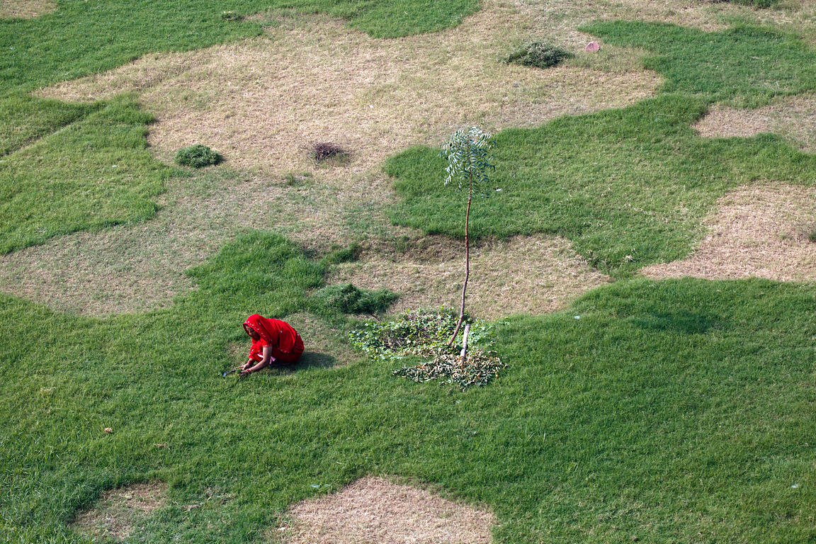 Aerial view of a woman hand cutting grass with a small sickle, Rajasthan, India