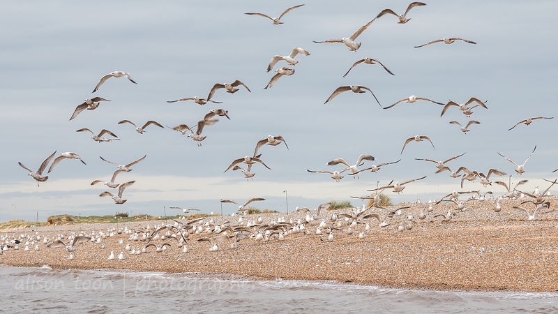 Blakeney Point, North Norfolk