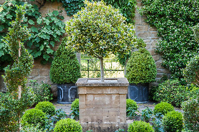 Walled garden designed by the late Graham Hopewell includes an ante-chamber featuring evergreen shrubs such as standard holly, Trachelospermum jasminoides, ivies, vines and box. Mill House, Netherbury, Dorset, UK