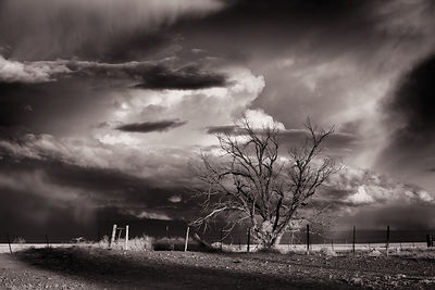 Storm and tree  | Nr Miami New Mexico | 2014