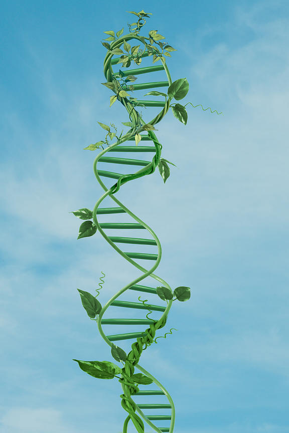 DNA as plant