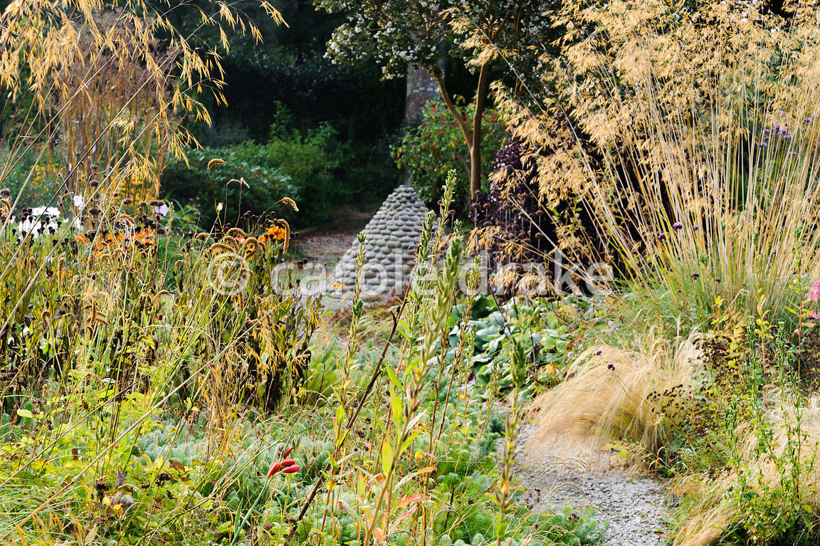 The flower garden featuring fountain-like flowerheads of Stipa gigantea, golden oat grass, plus many other grasses and herbac...