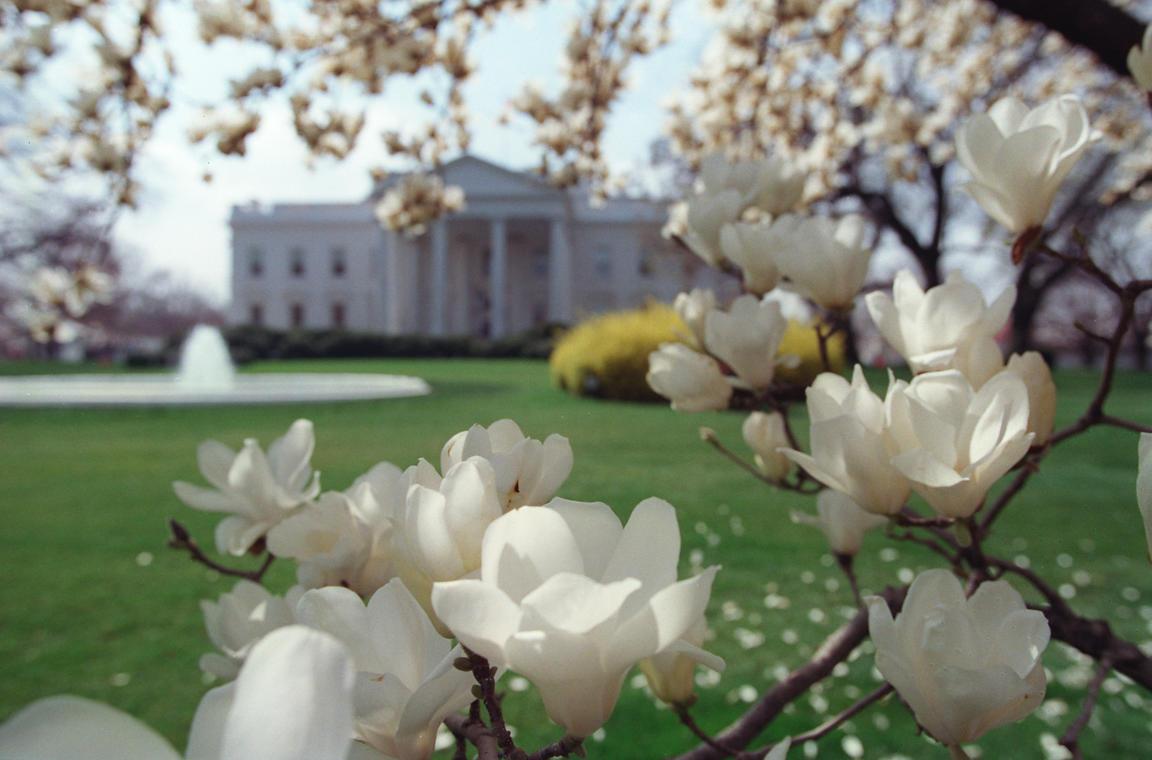 William Vasta Photography Magnolia Tree North Lawn White House