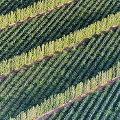 Pyrenees-Orientales  department of southern France. Agricultural field.