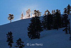 Trees Backlit by Rising Sun at Mt. Baker Ski Area