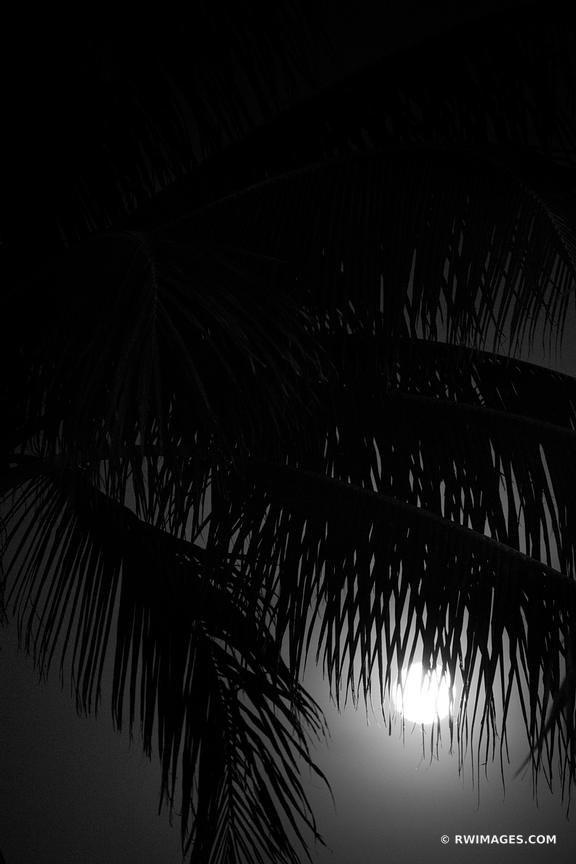 PALM TREES AND THE MOON MIAMI FLORIDA BLACK AND WHITE