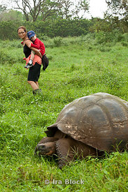 A woman and a child from the National Geographic Endeavour ship spot a giant tortoise in the grassy terrain of Santa Cruz.