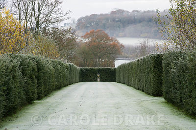 Stone urn acts as a focal point at the end of The Avenue, created with yew hedges.