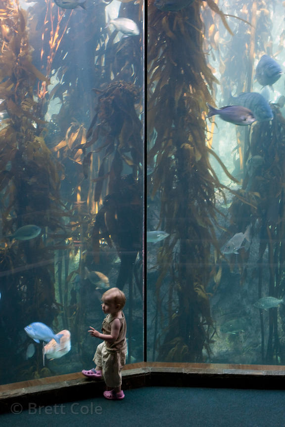 A child watches fish (sp.), Two Oceans Aquarium, Cape Town, South Africa