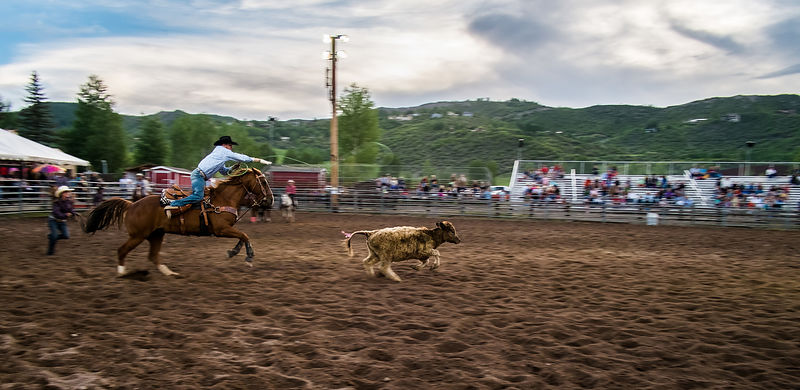 A man prepares to lasso a small calf during a rodeo.