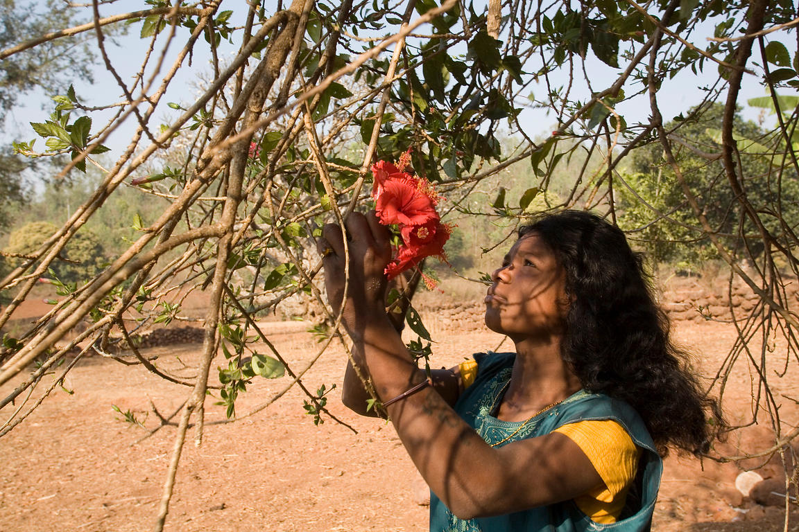 A tribal woman picking flowers