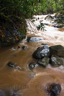 High water level and sediment load in the Rio Penas Blancas after a torrential rain, Las Nubes, Costa Rica