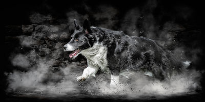Art-Digital-Alain-Thimmesch-Chien-636