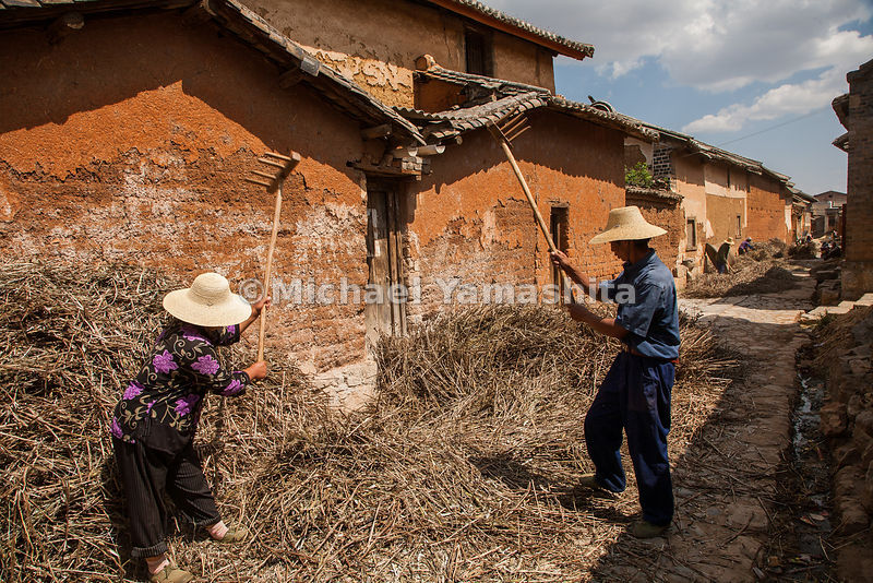 Farmers thrash their crop of Mung beans outside the weathered walls of Dali. The Tea Horse Road once ran through this picture...