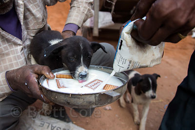 Good Samaritans feed a street dog puppy milk and biscuits at a construction site in Paharganj, Delhi, India