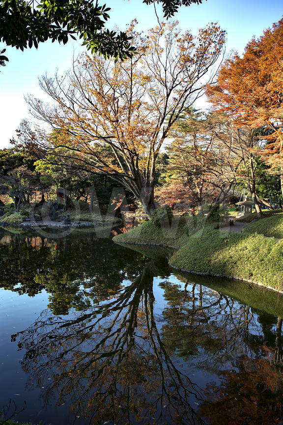 _W_P342-Tokyo-park-pond-reflection-tree