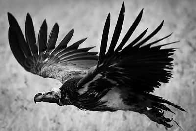 07390-Bird_Laurent_Baheux