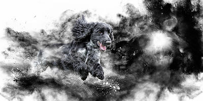 Art-Digital-Alain-Thimmesch-Chien-66