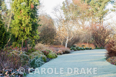 Winter garden includes evergreens such as Euonymus fortunei 'Minimus' and clipped box, colourful stems such as Cornus sanguin...