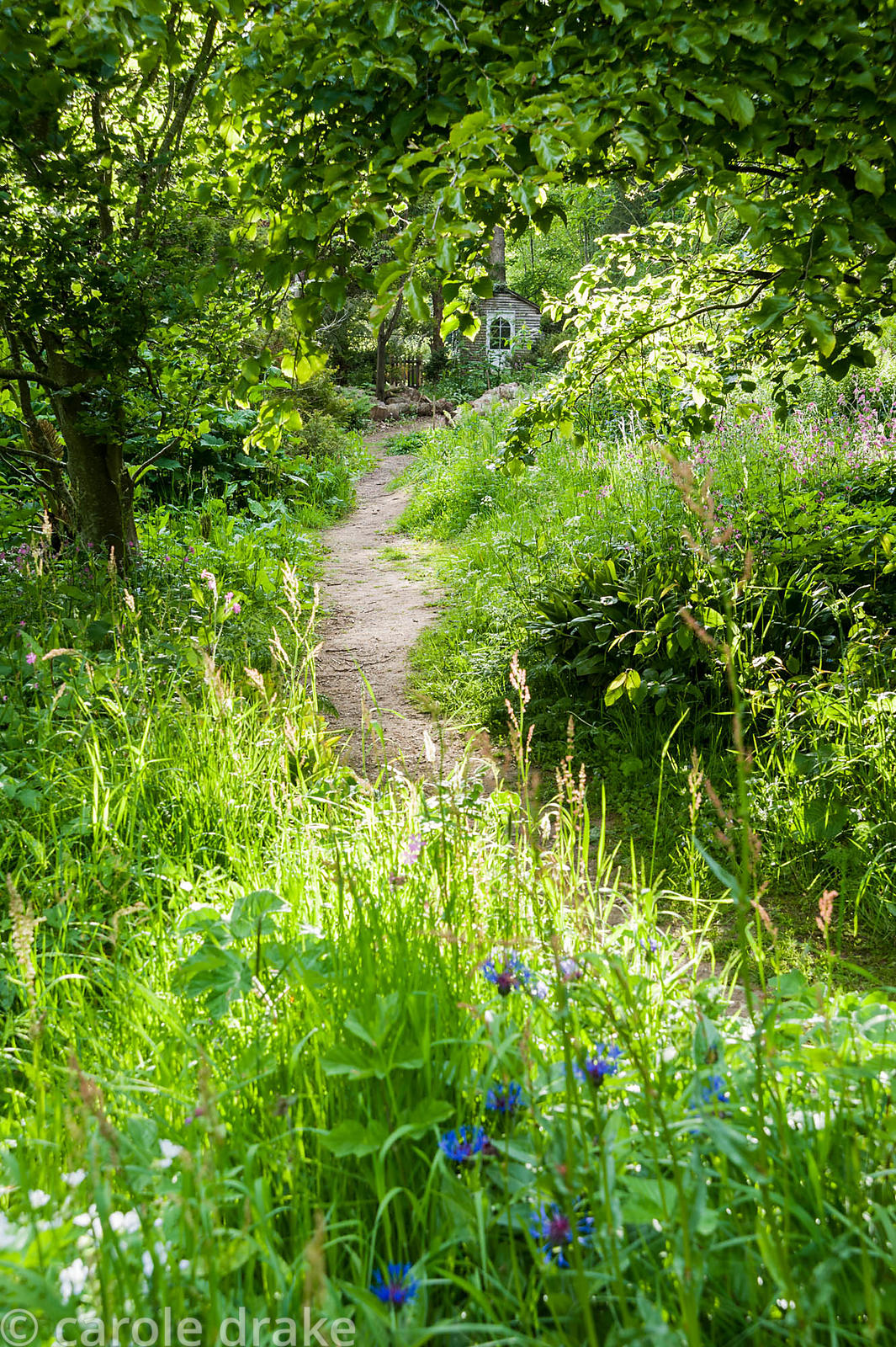 A path through the naturalistic Low Garden leads between long grasses, ferns, Solomon's Seal, perennial cornflower and red ca...