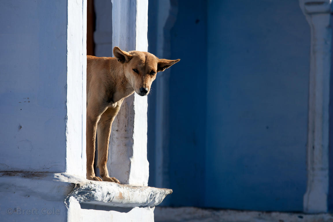 A dog waking up for the day in Pushkar, Rajasthan, India