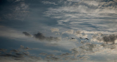 Seagulls in the sky #2