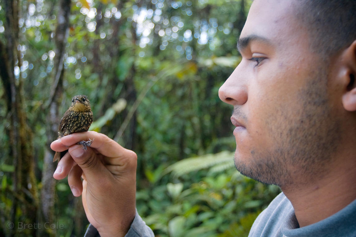 Quizarra resident Cesar Ivan Rojas Arias handles a (sp.) bird that will be banded as part of a York University research proje...