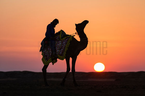 Silhouette of a Camel and Rider