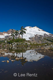 Mountain Hemlocks (Tsuga mertensiana) at the edge of a mountain tarn near the trail to Park Butte Lookout with Mt. Baker loom...