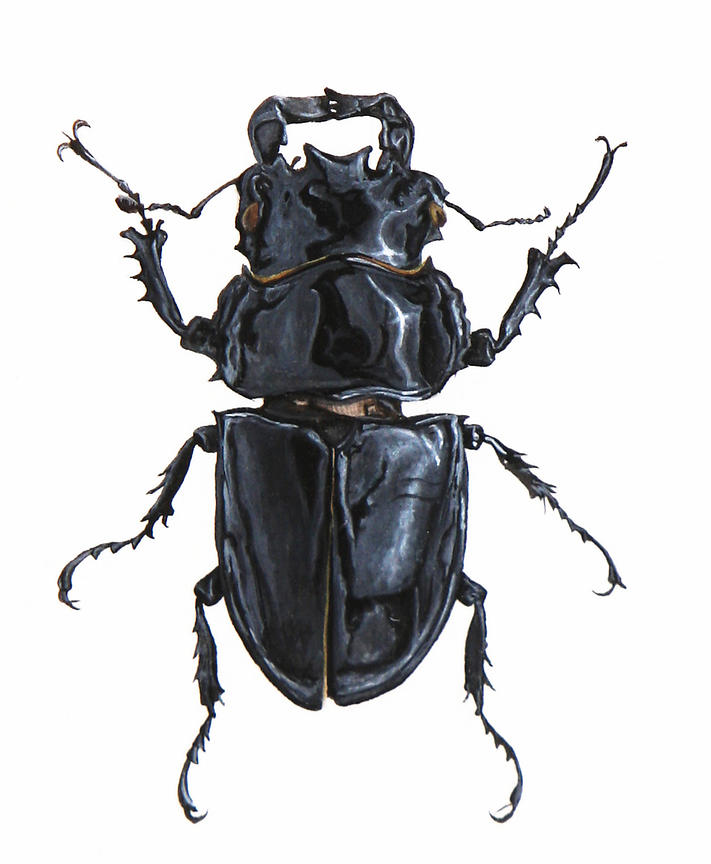 Beetle_2_original