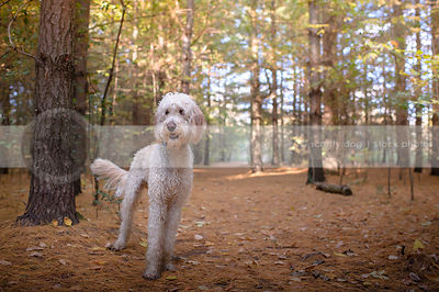 scruffy wet mixed breed dog wagging standing in forest clearing