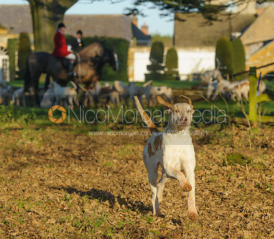 The Cottesmore Hunt at Pickwell 28/12 photos