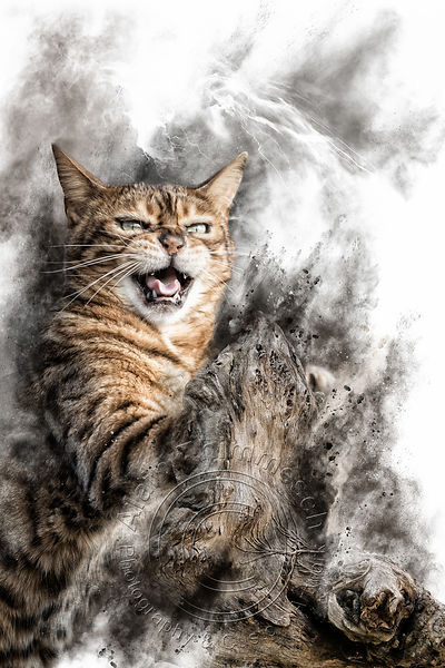 Art-Digital-Alain-Thimmesch-Chat-25