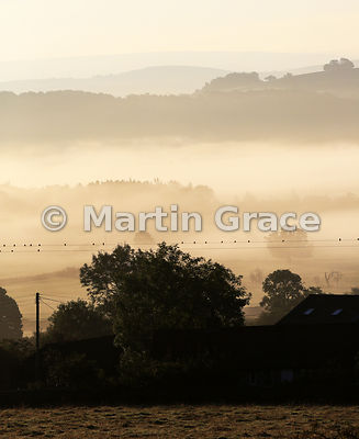Starlings (Sturnus vulgaris) gathering on the wires, with September mists, Lyth Valley, Cumbria, England