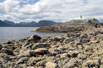 Museel-covered rocky shores along the Inside Passage, Great Bear Rainforest, British Columbia