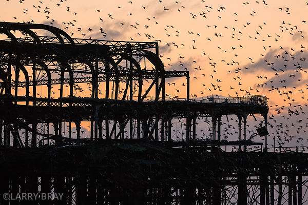 West Pier with starlings flying silhouetted against sky in Brighton, East Sussex, UK