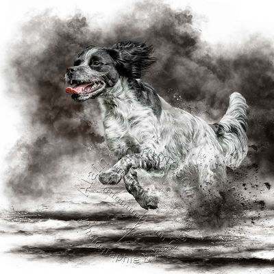 Art-Digital-Alain-Thimmesch-Chien-634