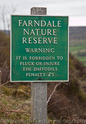 Daffodil sign at Farndale Nature Reserve, Yorkshire. © Jo Whitworth