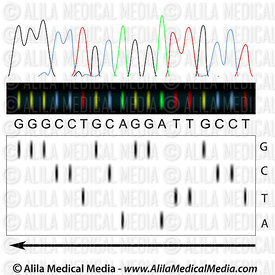 DNA sequencing principle