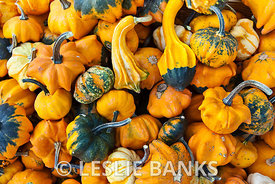 Pile of gourds background