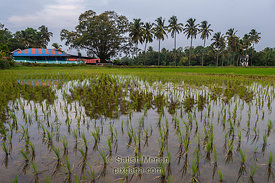 Shiva Temple and Surrounding Fields, Polpully, Kerala, INDIA