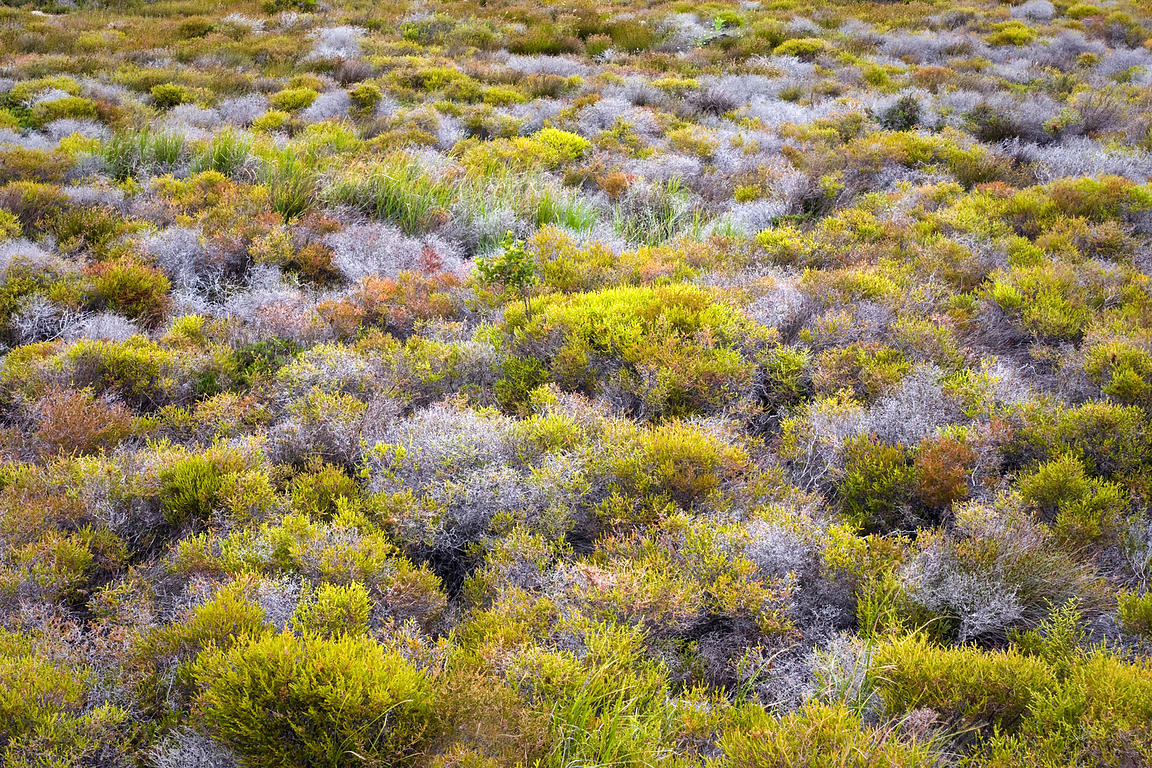 Gorgeous fynbos, Patry's Valley, Cape Peninsula, South Africa