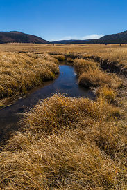 San Antonio Creek in Valles Caldera National Preserve