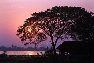 A large tree and a fishing hut are silhouetted at sunset in the East Kolkata Wetlands, Kolkata, India.