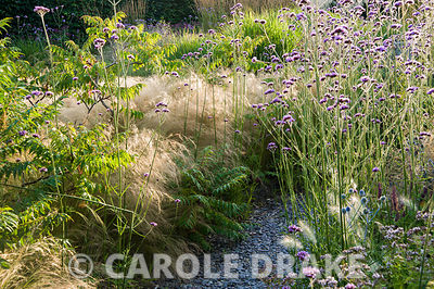 The Barn Garden, a mix of grasses and herbaceous perennials including pale Stipa tenuissima, Rhus typhina 'Dissecta' and purp...