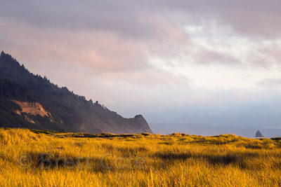 Late light on Gold Beach, Prairie Creek Redwoods State Park, California